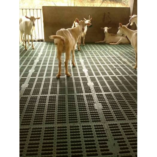 Animal Plastic Slatted Flooring