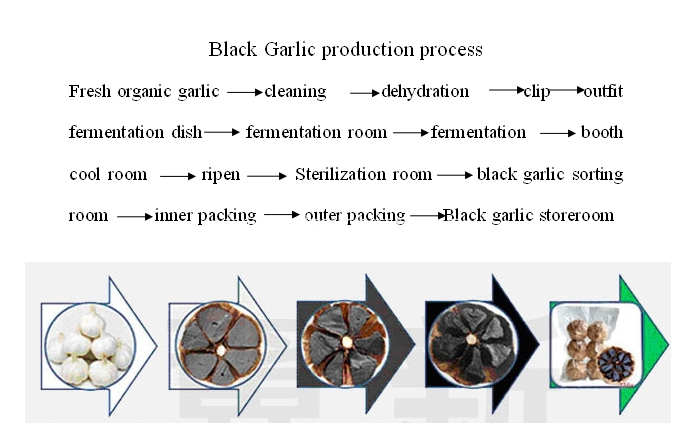 black garlic fermetation process