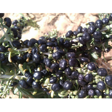 Dry Wild Black Wolfberry