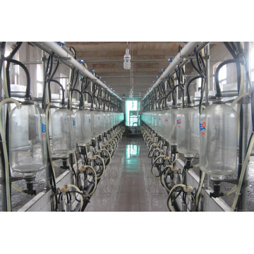 Herringbone milking parlor for cows