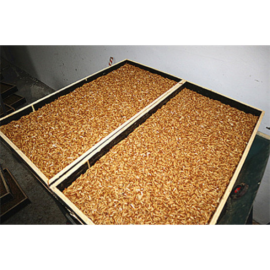 High Protein Chicken Feed Dried Mealworm