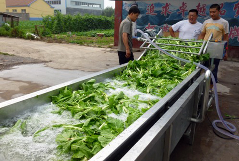 cabbage spinach washing