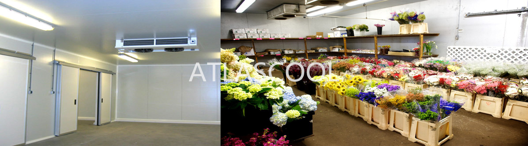 flower storage cold room
