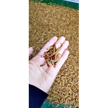 high protein from mealworms