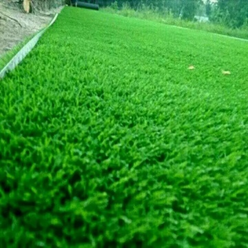 Artificial Grass for fields PE PP Garden Grass