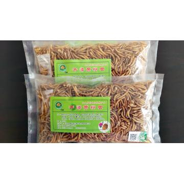 best bullfrog food mealworms