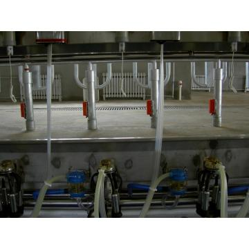 Arfimilk automatic fish bone milking parlor