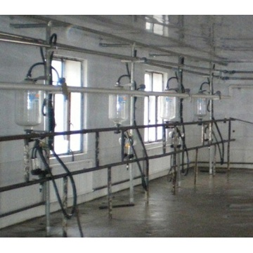 KLN herringbone cow equipment goat milking parlor