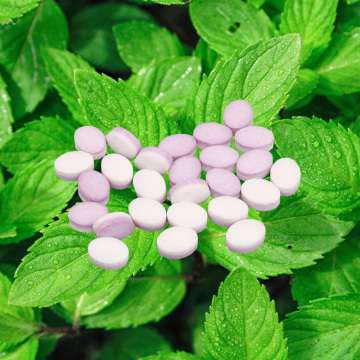 bulk powder sweet leaf extract Stevia Mints
