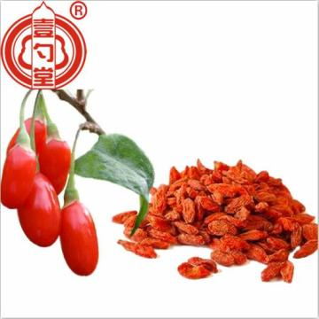 Conventional dried goji berry Ningxia fruit