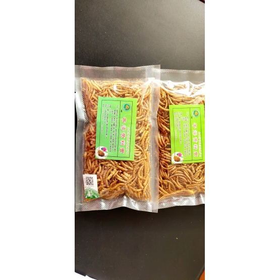 Protein-Riched Yellow Mealworms for export