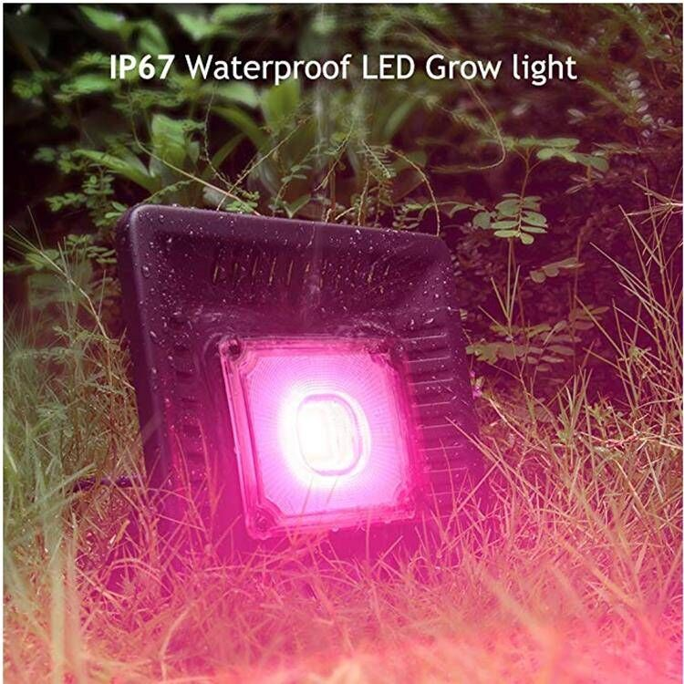 100w led light grow