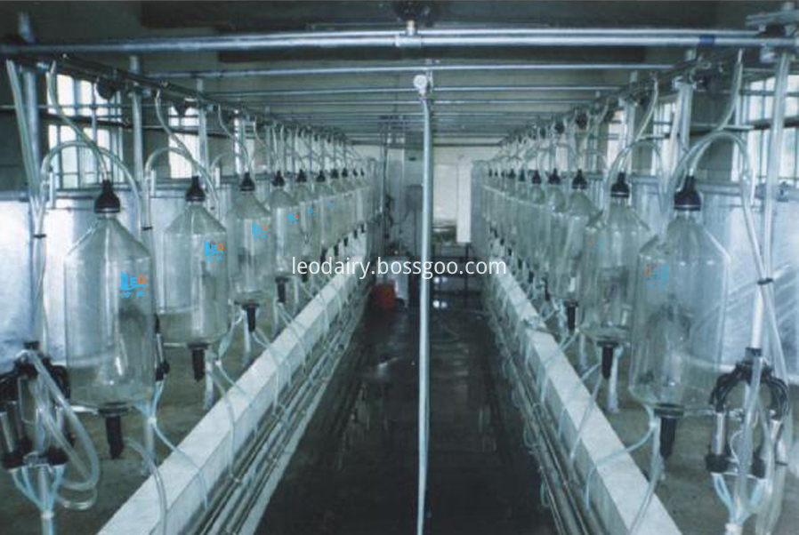 fishbone milking hall